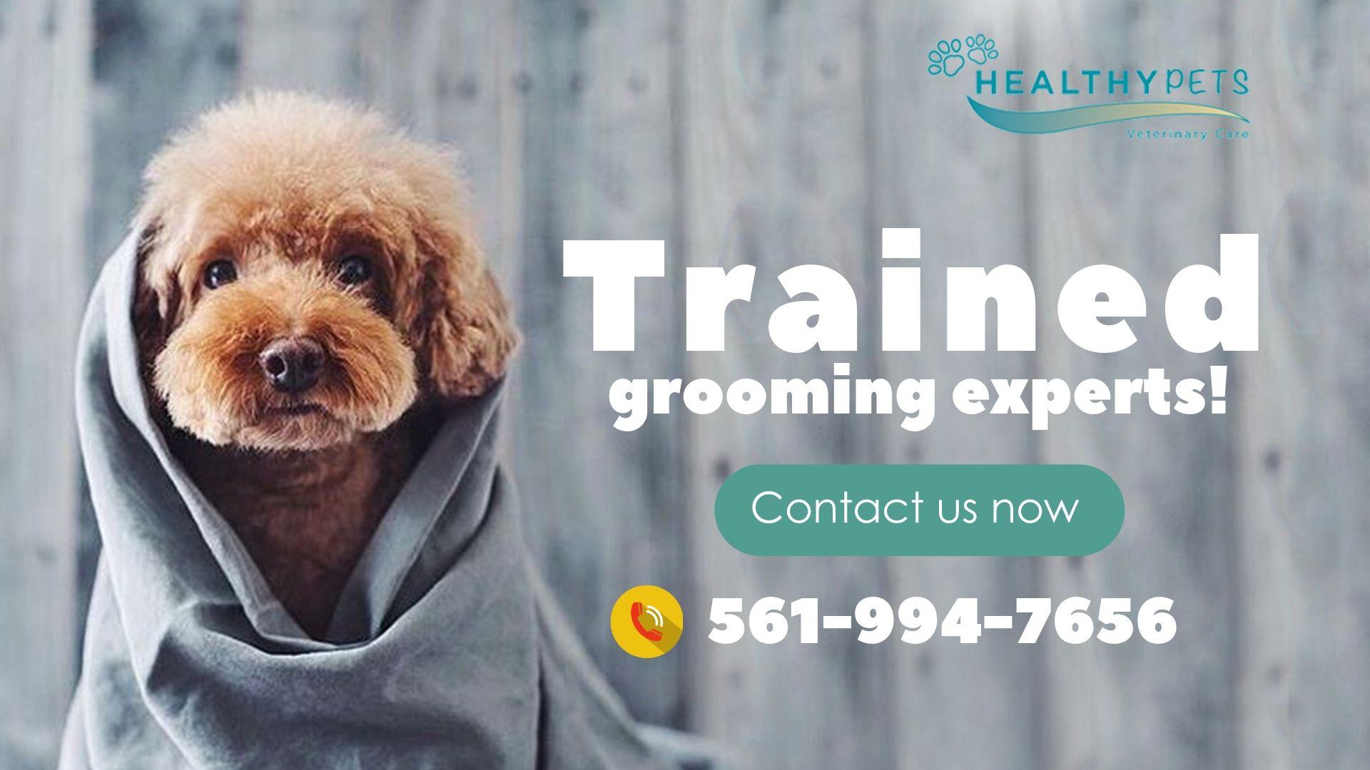 Dog Grooming Services Near Boca Raton Fl Healthy Pets Dog