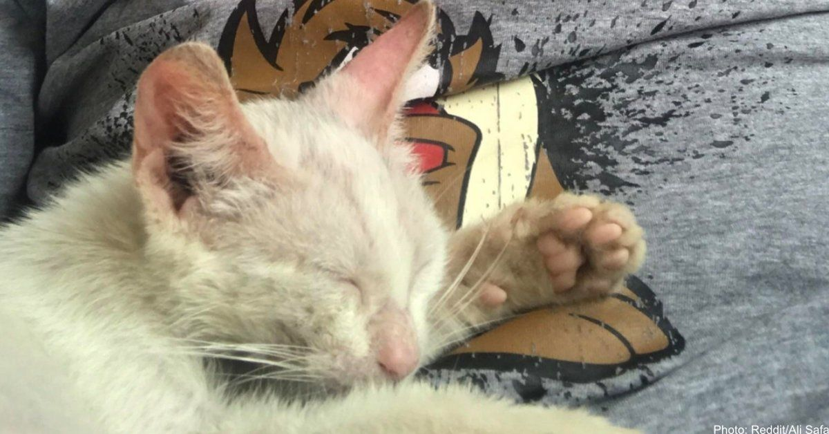 Napping Man Wakes To Find Himself Cuddled By Stray Kitten