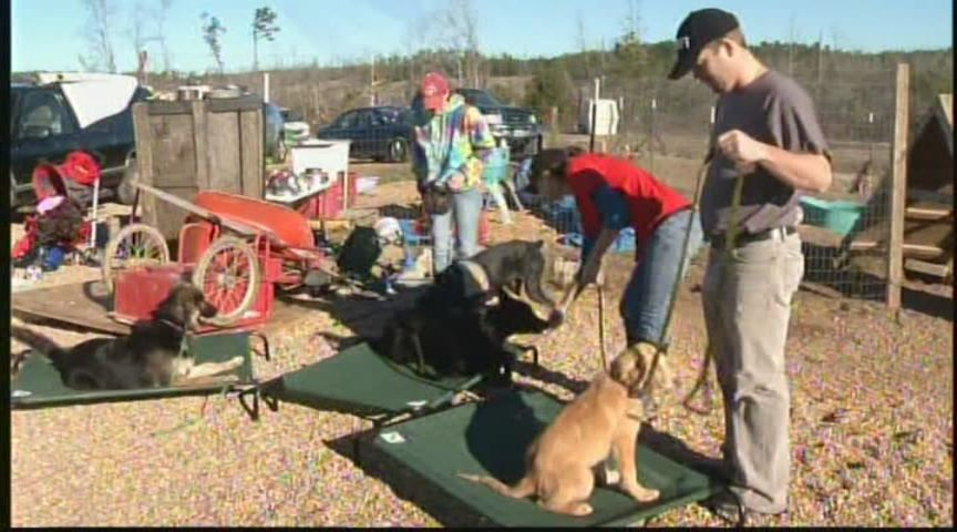 Dog trainer giving away 26 service dogs in kindness campaign - WSFA