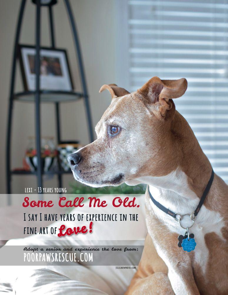 Pet Photographer Jill Caren Created This Psa For A Local Magazine To Encourage People To Adopt Senior Dogs Cause Seniordogs Senior Dog Pet Photographer Dogs