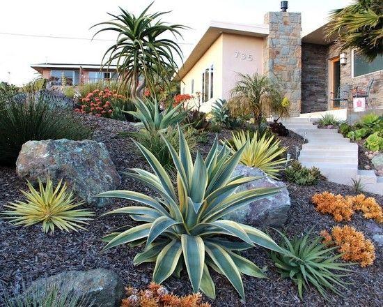 drought tolerant landscape - Desert Landscape Design Ideas