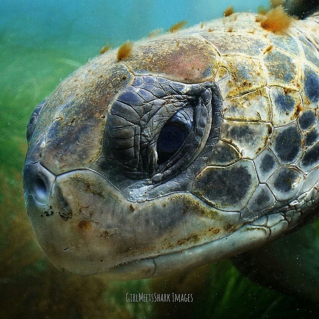 Sea Turtle | Turtle LOVE | Pinterest | Turtle, Animal and Animal kingdom