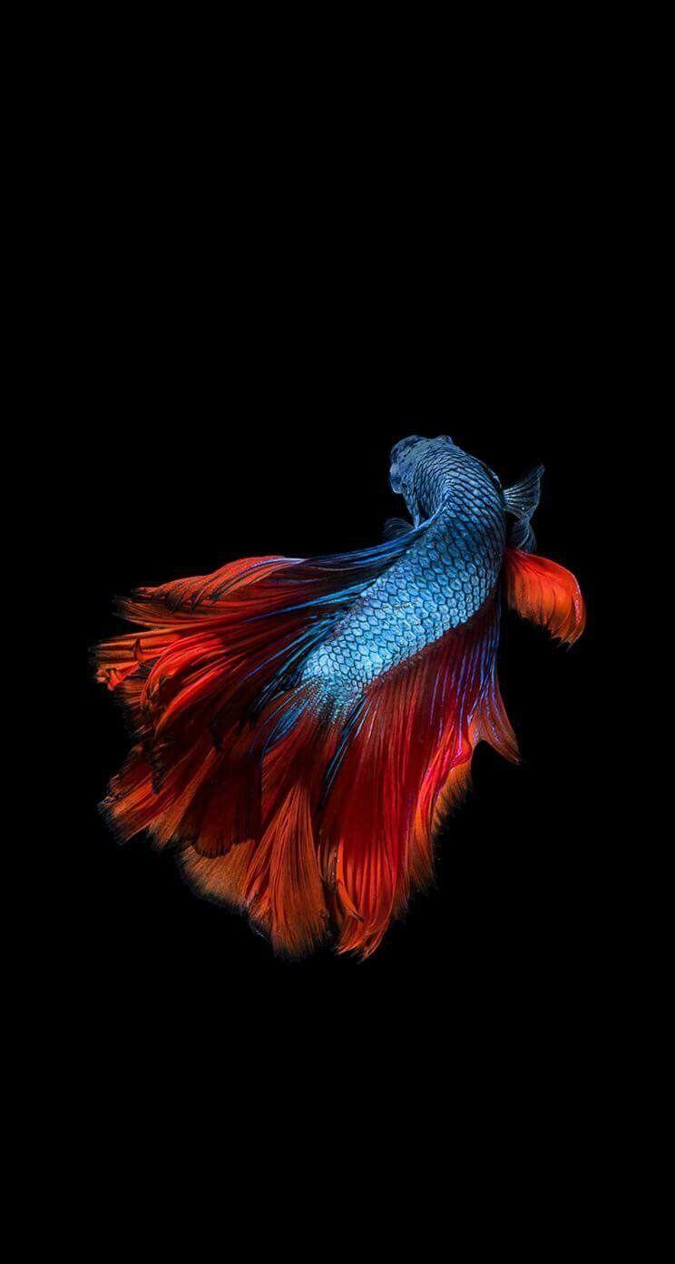 Pin by Samantha Keller on ..1 Fish wallpaper iphone