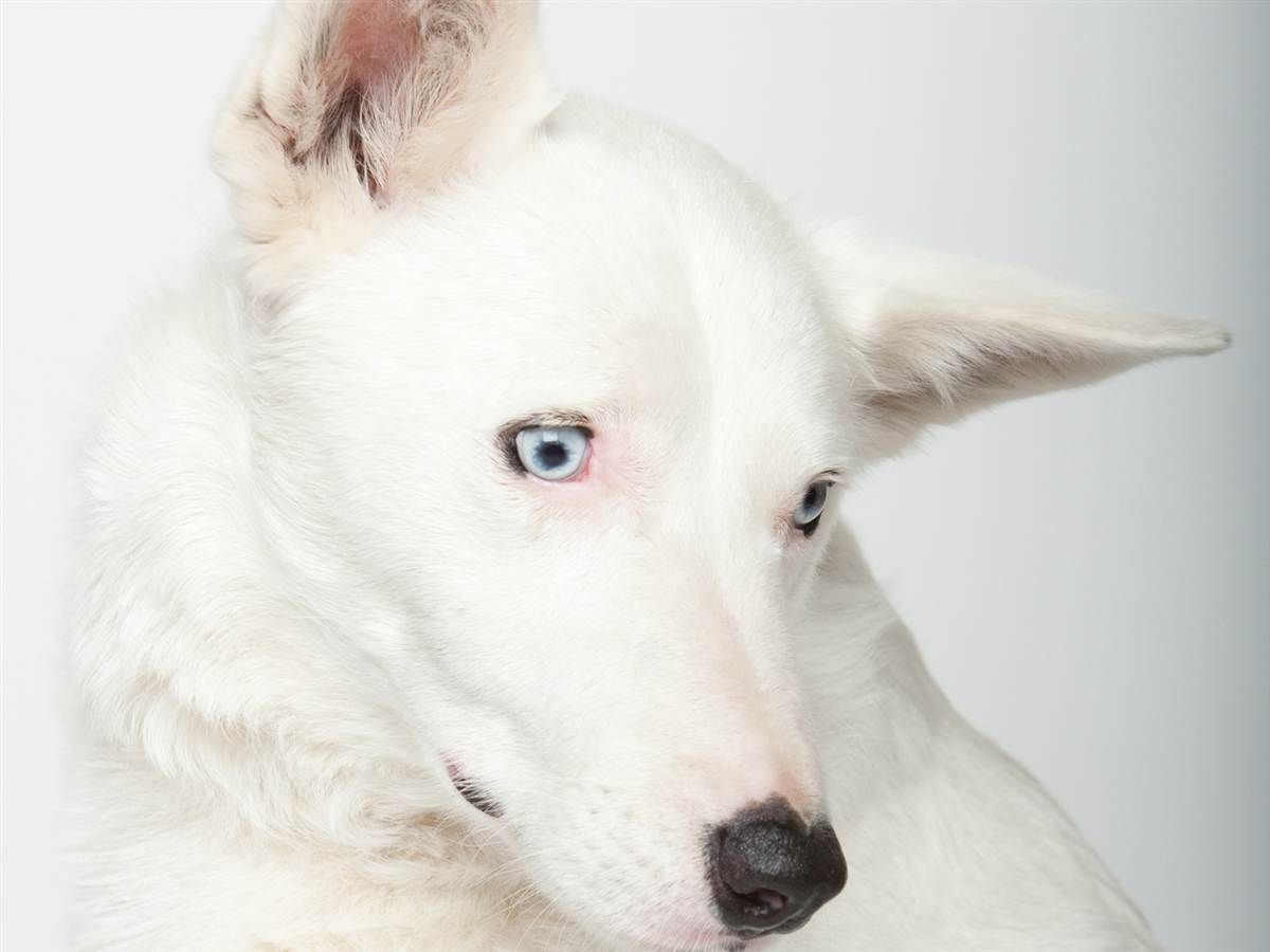 Sensing Love Meet Deaf Dogs Who Got New Leashes On Life Slideshows And Picture Stories Today Com Deaf Dog