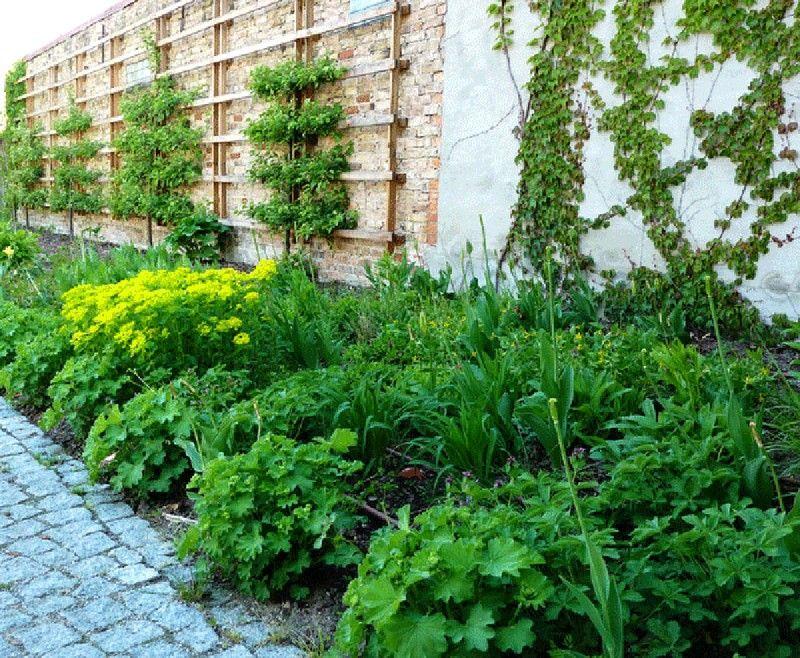 Planter Un Espalier Ou Une Palmette Chez Vous Jardins Fleur Jardin Jardin Vertical