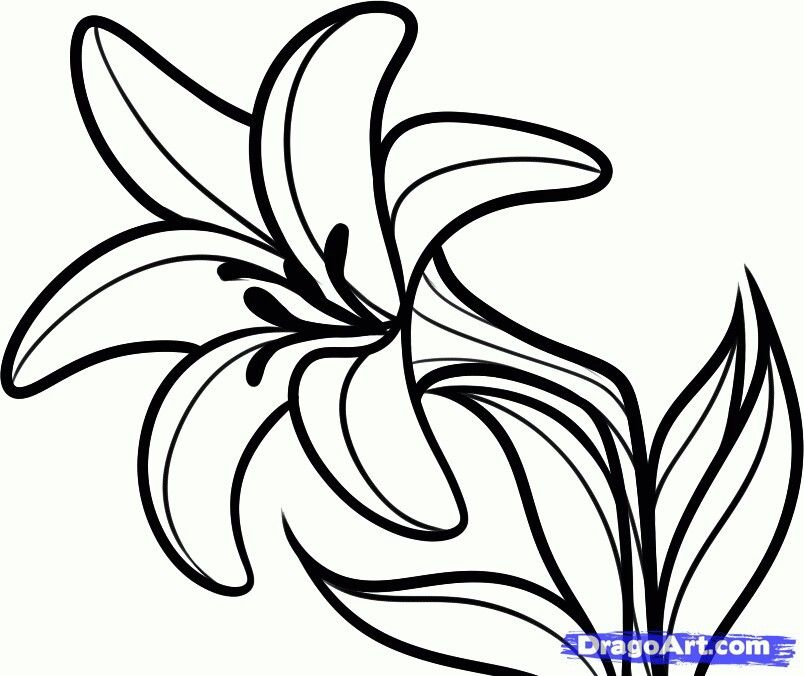 Pin By Lee Therainbowfairy On Color Flowers Lilies Drawing