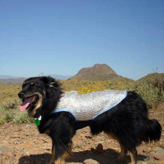 Chillybuddy Dog Cooling Vest For Summer Dog Cooling Vest Dogs