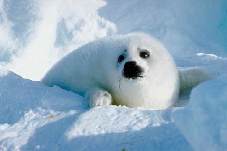 cute animal http://ift.tt/2dOMApF
