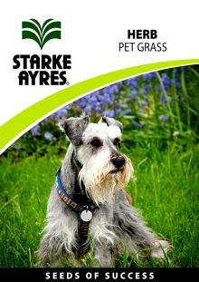 Pet Grass. Grow A Evergreen Grass Patch For Pets In Your Garden Or Patio  Pots