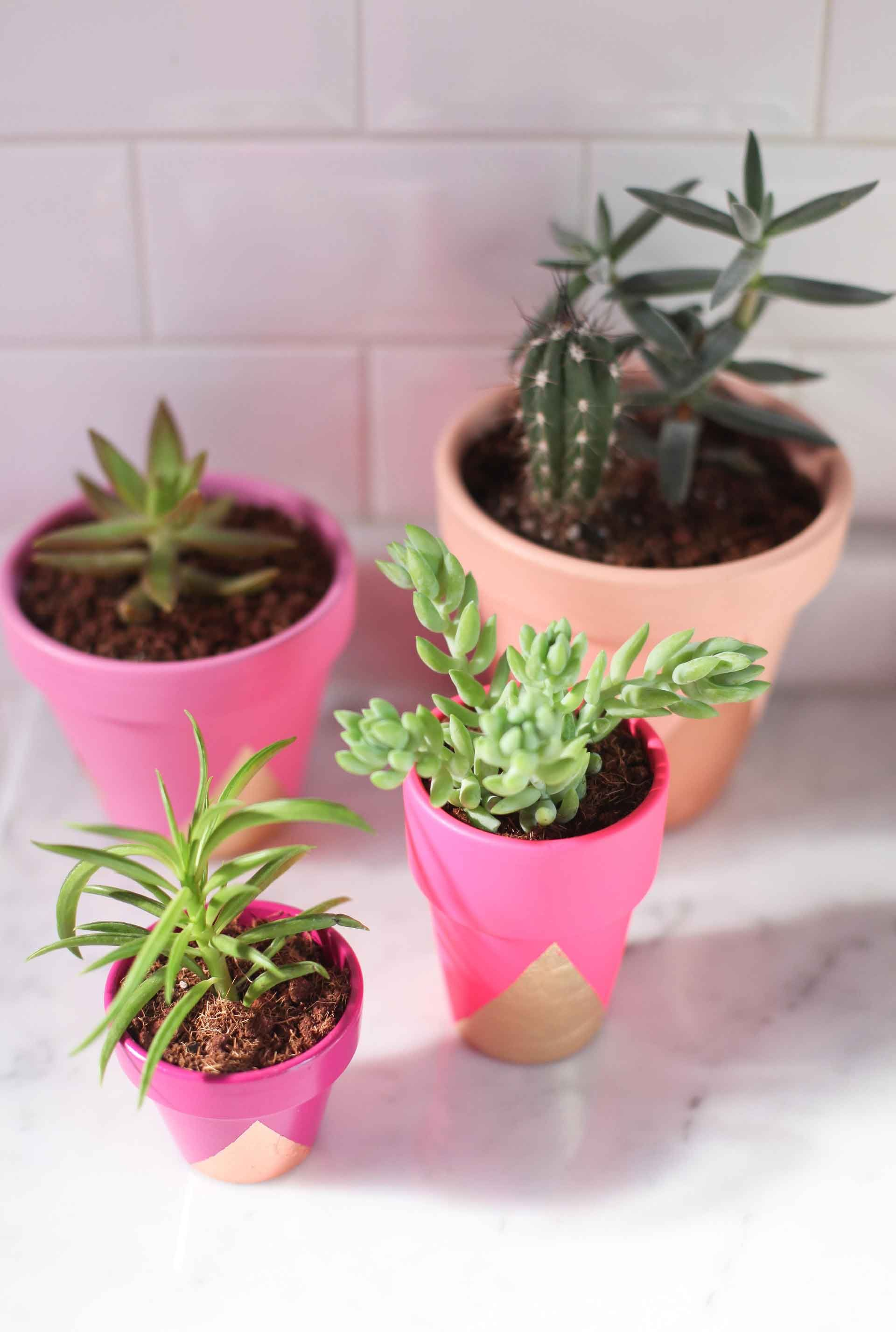Diy Gold Leaf Succulent Plants (Honest Tip Use Non Toxic Paint)