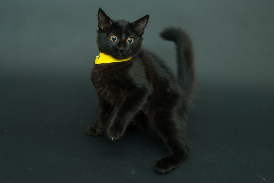It S Friday The 13th Adopt A Black Cat Black Cat White Cats Cats