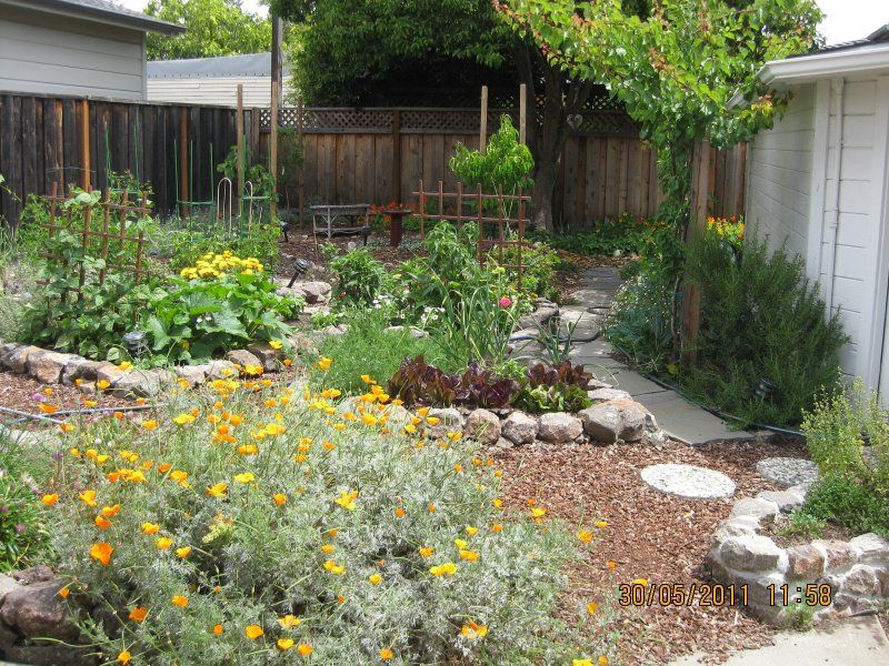 Back Yard Permaculture Gardening | New Permaculture Garden ... on Backyard Permaculture Design id=94653