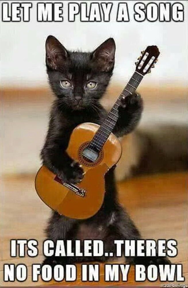 Photo of Details about Funny Cat Playing Guitar Animal Photo Fridge Magnet 2″x3″ Collectibles