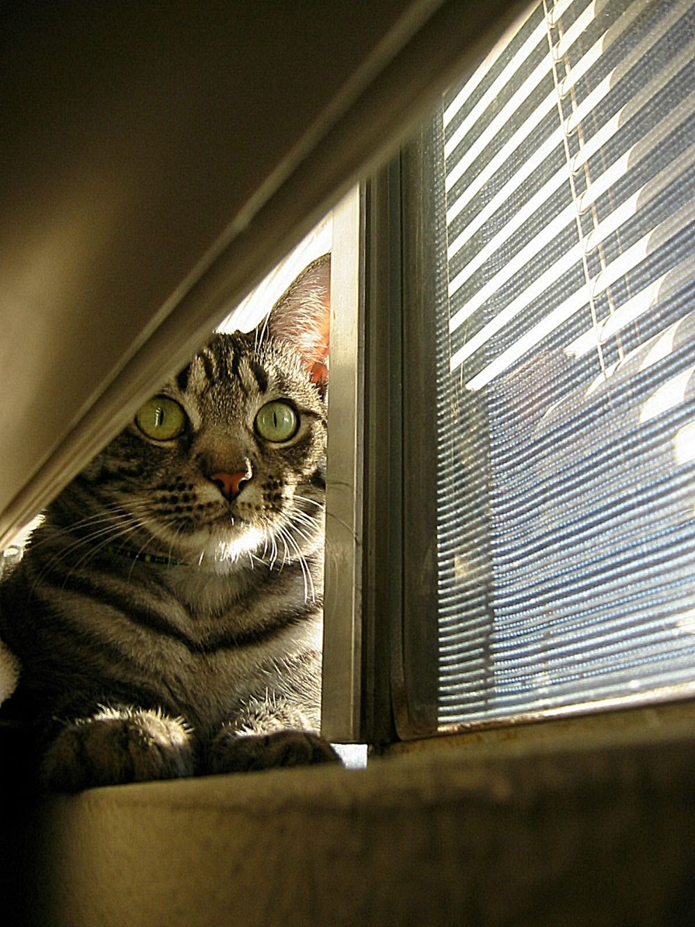 Tips For Finding A Pet-friendly Rental