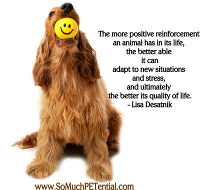 Positive Reinforcement In Dog Training So Much Petential