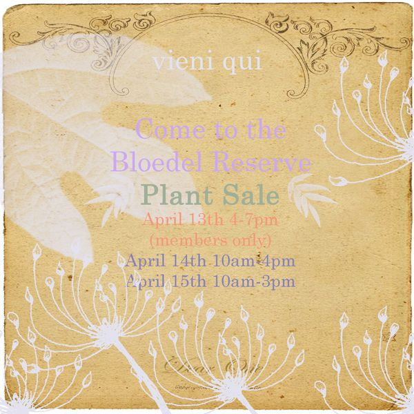 bloedel reserve plant sale on bainbridge island: april 13th (members only), april 14th + 15th