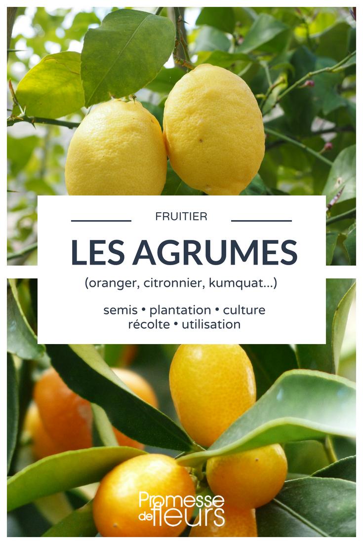 Citronniers Orangers Et Autres Agrumes Les Planter Et Les Cultiver En Pot Ou Au Jardin Agrumes Citronnier Jardins