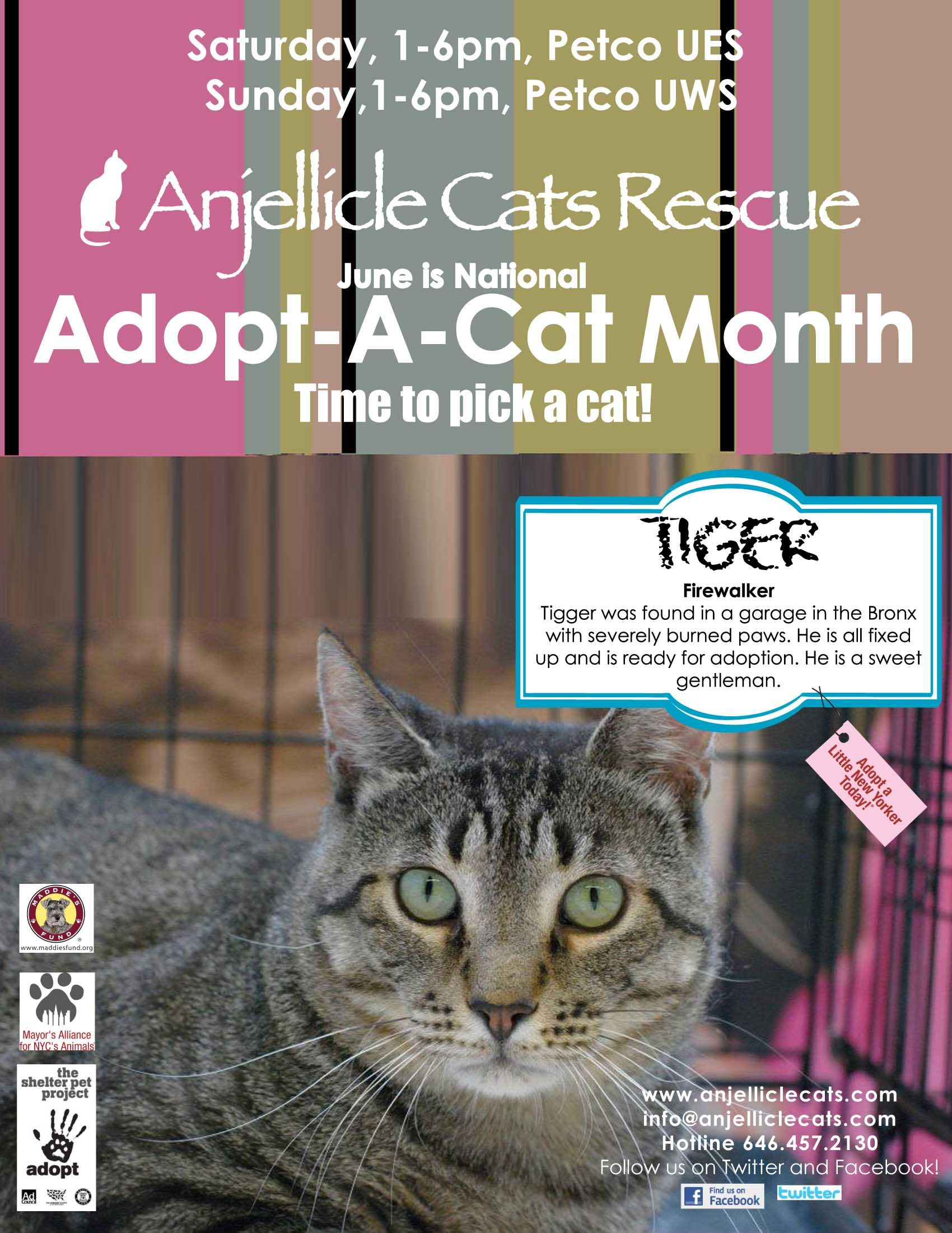 Tiger Adoption Events Saturdays And Sunday To See Our Adoptable Cats Petco 1280 Lexington Ave Ny Sat 1 6pm Petco Cat Adoption Cat City Cat Rescue