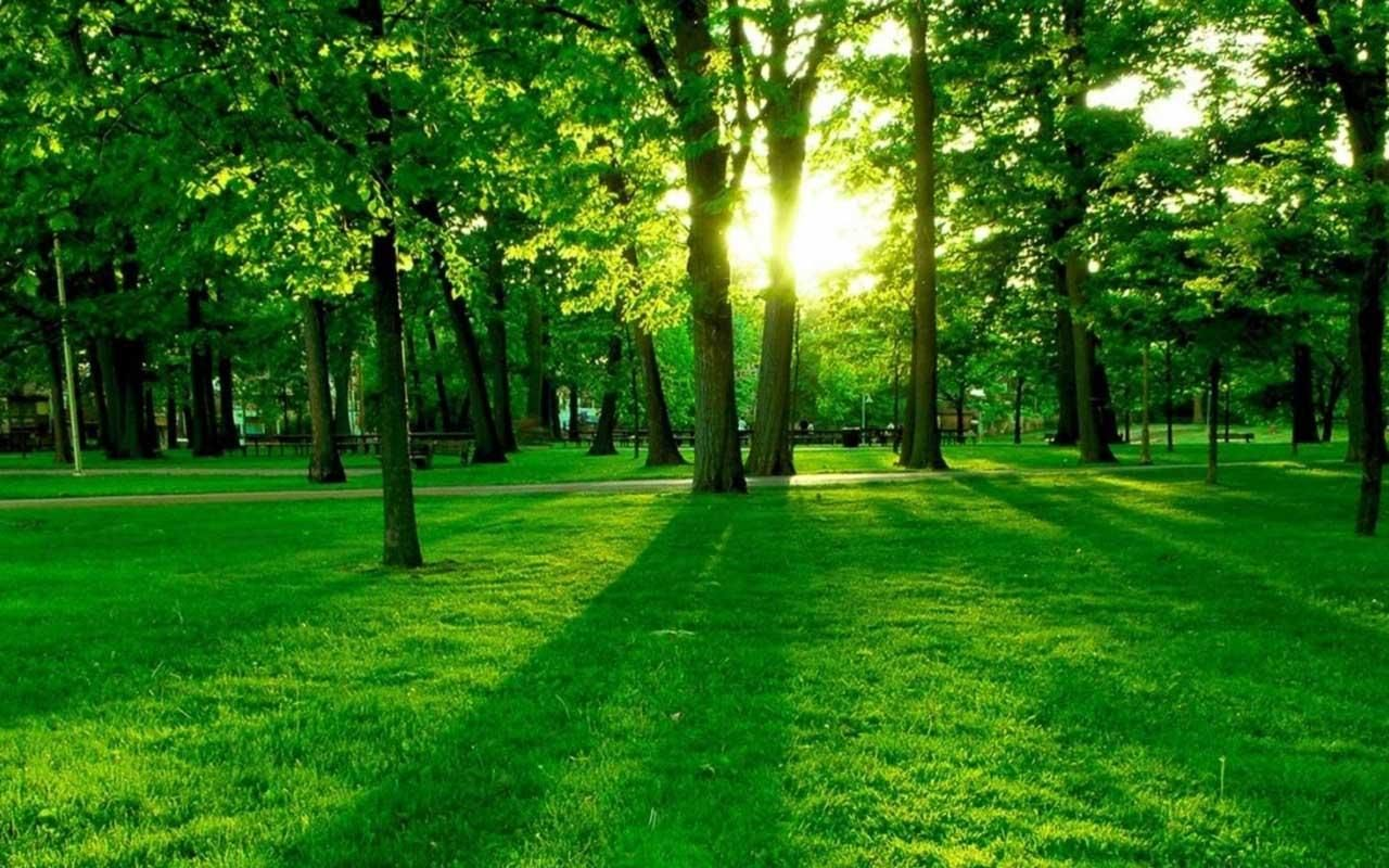 Green Forest Wallpapers 1366 768 Pictures Of Forest Wallpapers 36