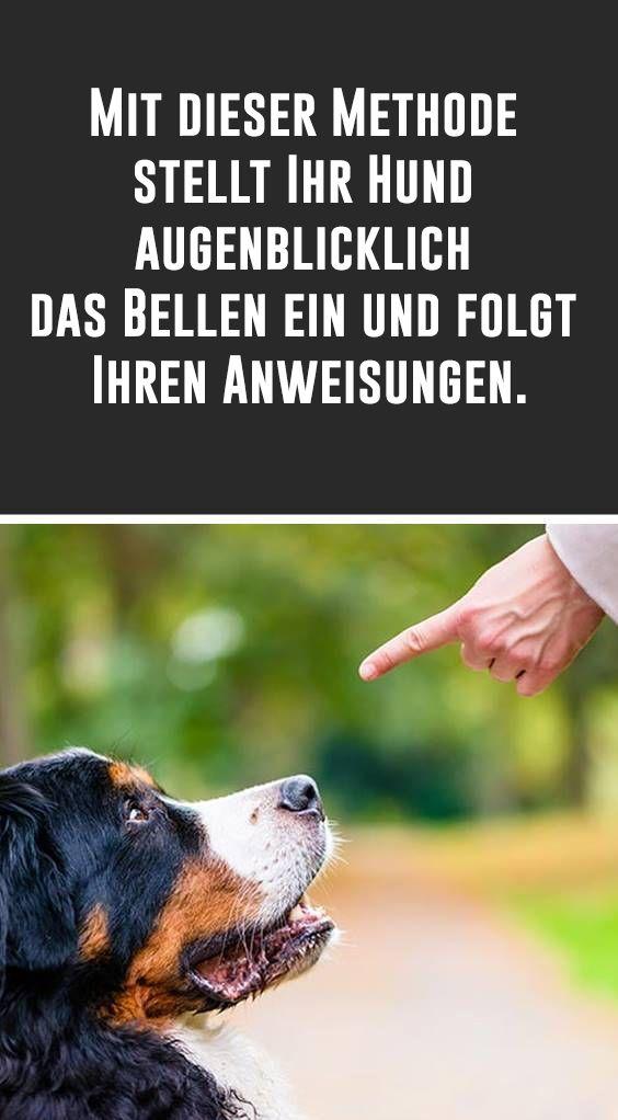 Mit dieser Methode stellt Ihr Hund augenblicklich das Bellen ein und folgt Ihren Anweisungen. #tippsundtricks
