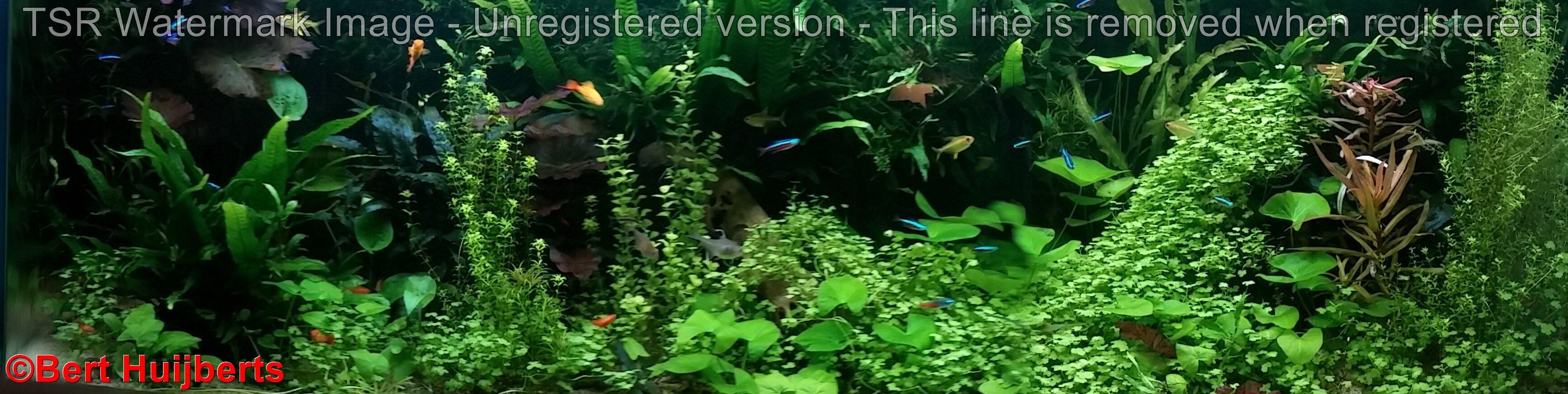 Pin by bert huijberts on aquarium pinterest aquariums