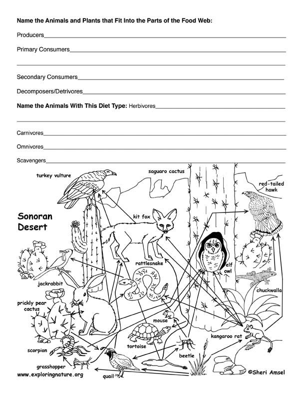 Desert Food Web Activity First Year of Teaching – Producer Consumer Decomposer Worksheet