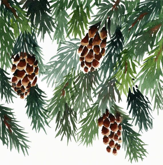 Watercolour Christmas Tree: 10 Pine Christmas Cards, Card Set, Watercolour, Trees
