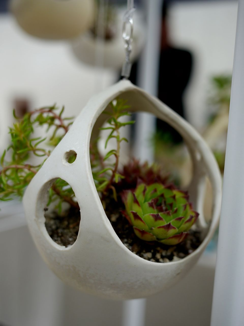 Hanging ceramic planter with succulents, by Kamspots - Hanging Ceramic Planter With Succulents, By Kamspots Ceramics