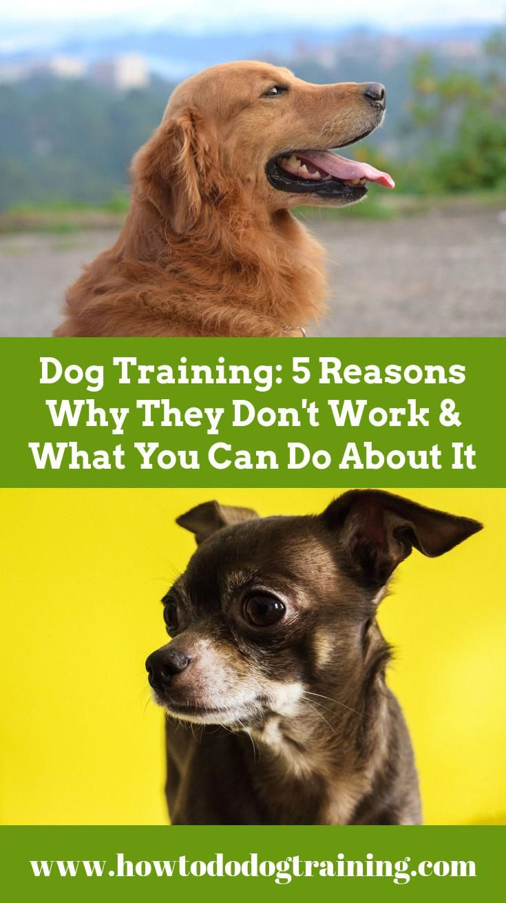 Need Support With Pet Training Look At These Recommendations When