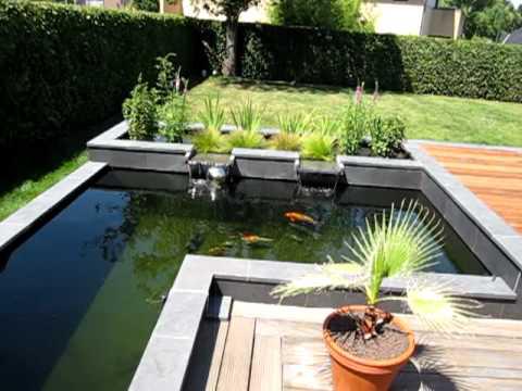Petit bassin poisson petit bassin en avec des jacinthes - Bassin japonais carpe koi asnieres sur seine ...