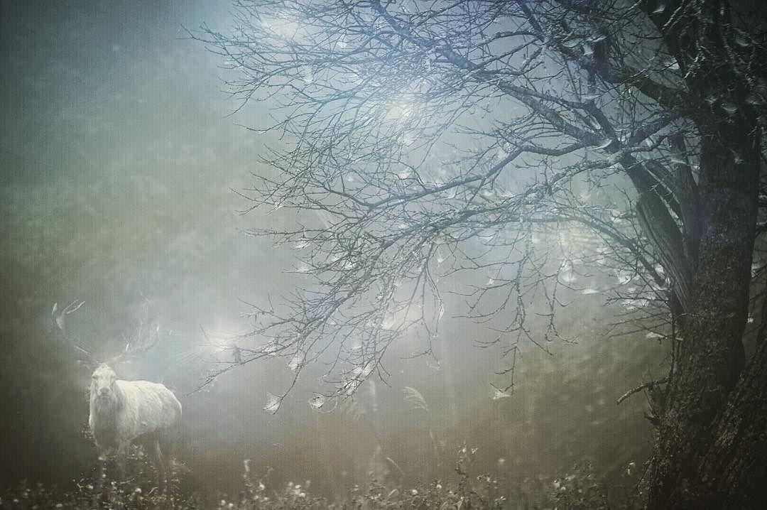 滋賀県 幻想 おにゅう峠の帰りもまだまだ濃霧に包まれていて