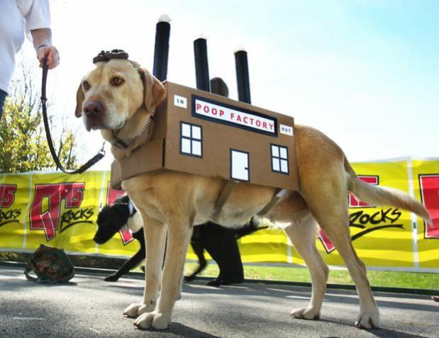 Pin On Everything Dog