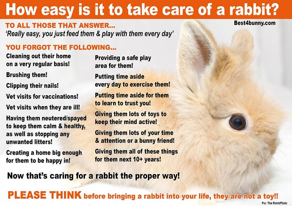Rabbit Care Advice Best 4 Bunny Rabbit Care Rabbit Bunny Care