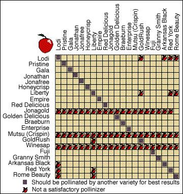 Apple pollination chart nurseries in the pacific northwest stock up