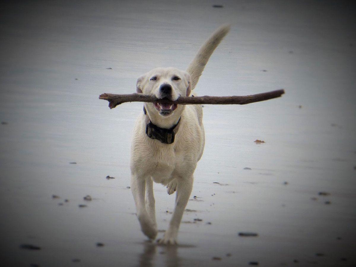 Dog Friendly Beach Vacation