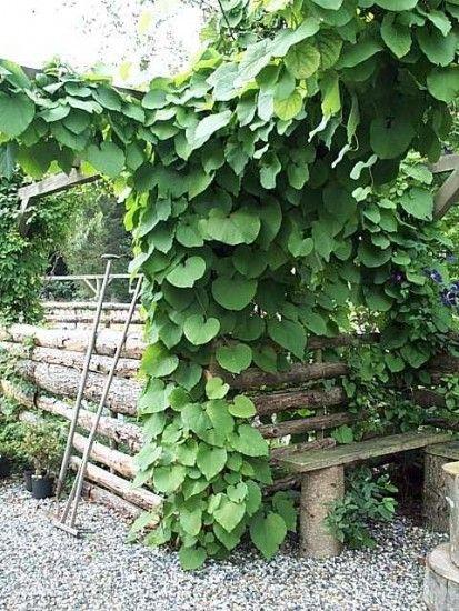 Pin van leen leroy op city garden blommor for Tuinontwerp eetbare tuin