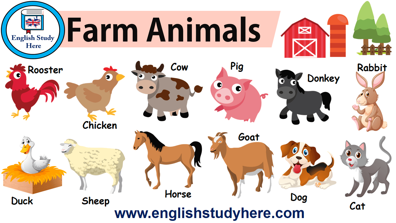 English farm animasl names and pictures, Farm Animals