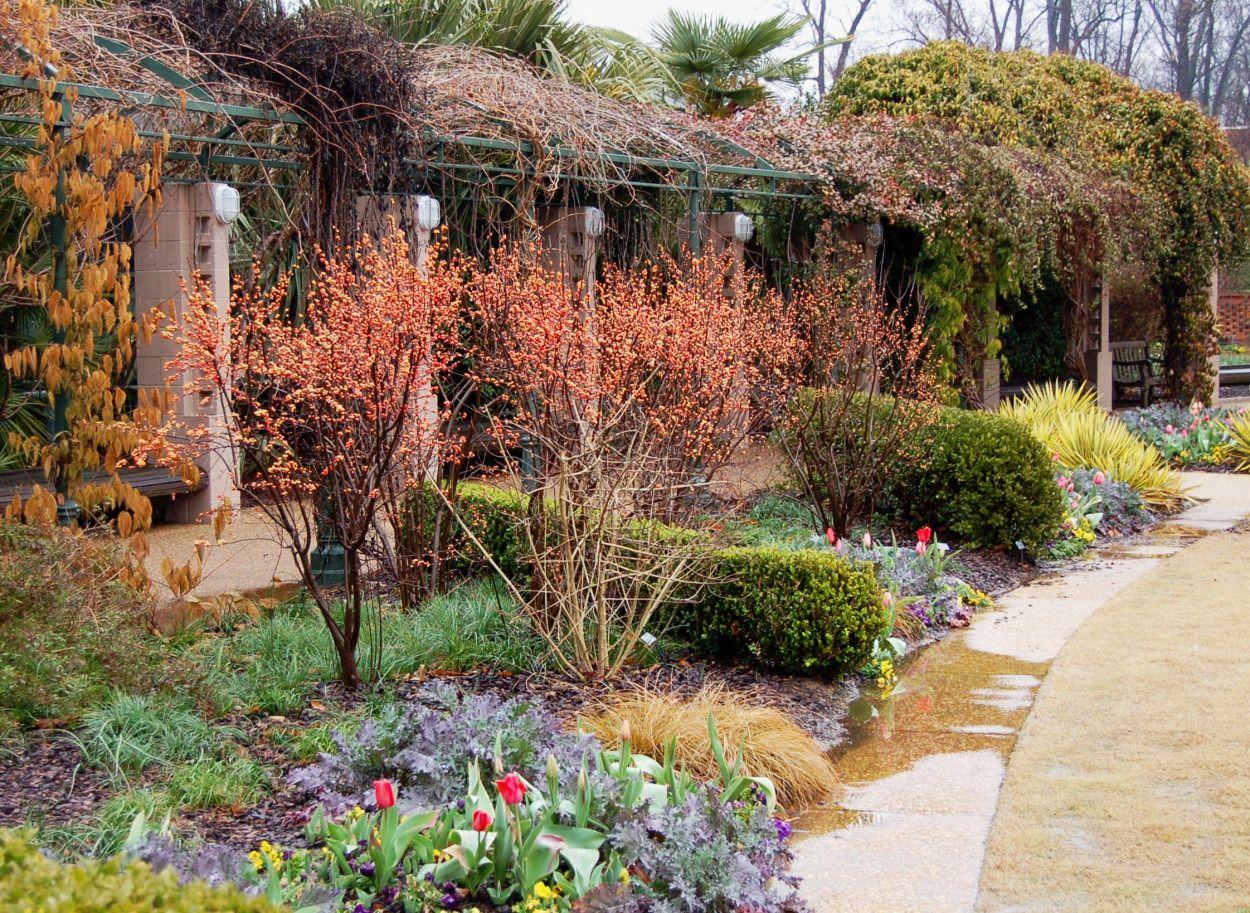 The Inspired Gardener | Plants for Winter | Pinterest | Gordon ...