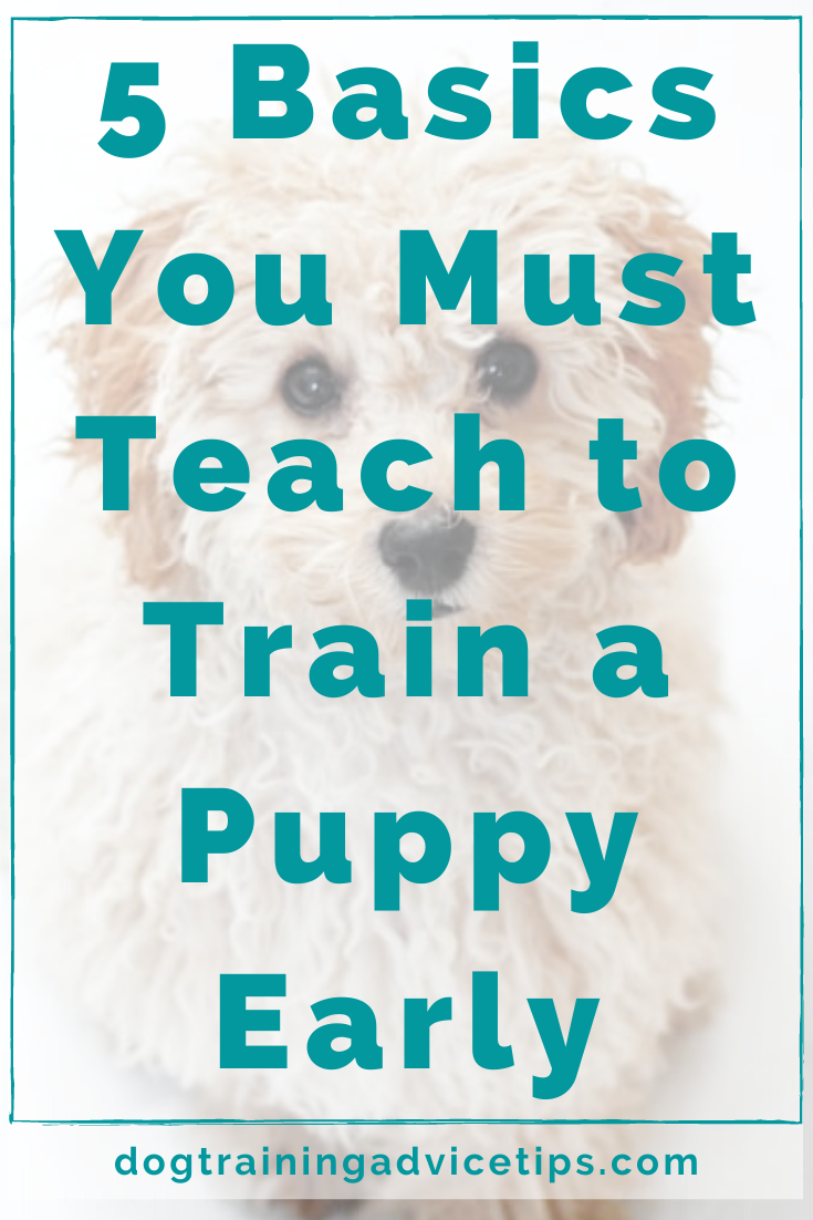 5 Basics You Must Teach To Train A Puppy Early In 2020 Puppy Training Dog Training Advice Dog Training Obedience