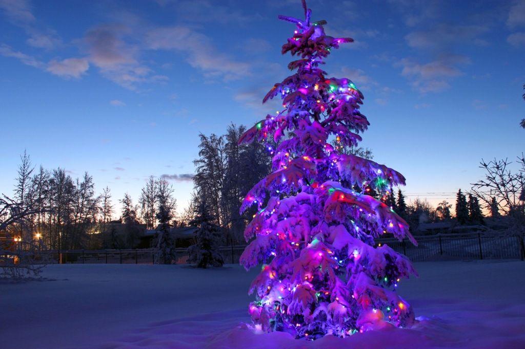 Christmas tree at the sunrise christmas around the world