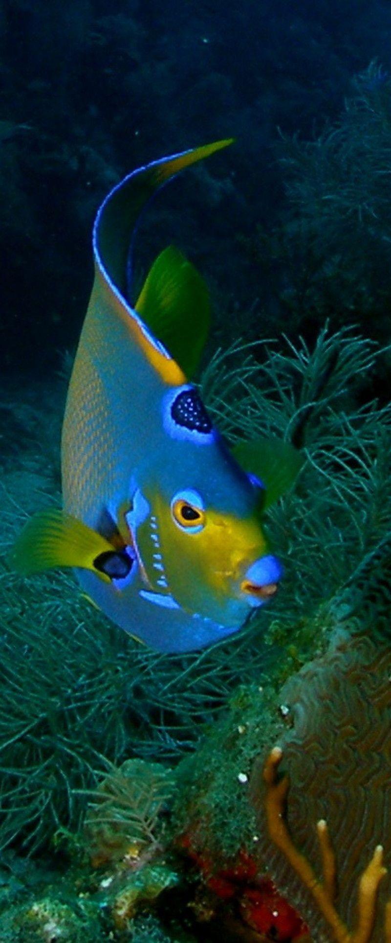 Pin de Heather Hampl en Ocean | Pinterest | Marino, Bellisima y Acuario