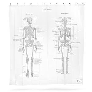 Order The Human Skeleton Shower Curtain To Learn Anatomy In The Shower.  Apollo Box Has Gifts For Science Majors And Other Skeleton Home Decor.