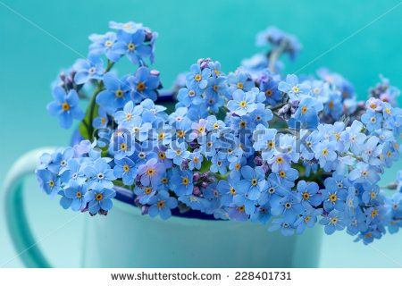 Stock Images similar to ID 102075259 - arrangement of blue forget ...