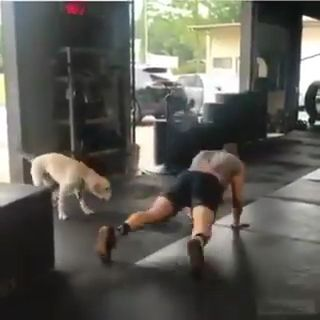 Man & Dog Love to do gym together. Please follow Animals Board for more videos