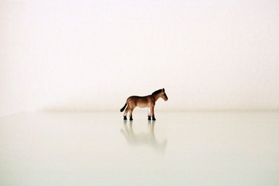 tiny donkey print