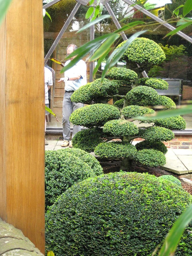 Photo Jardin Zen Chez Particulier ilex crenata acheter vos arbres chez le spécialiste du