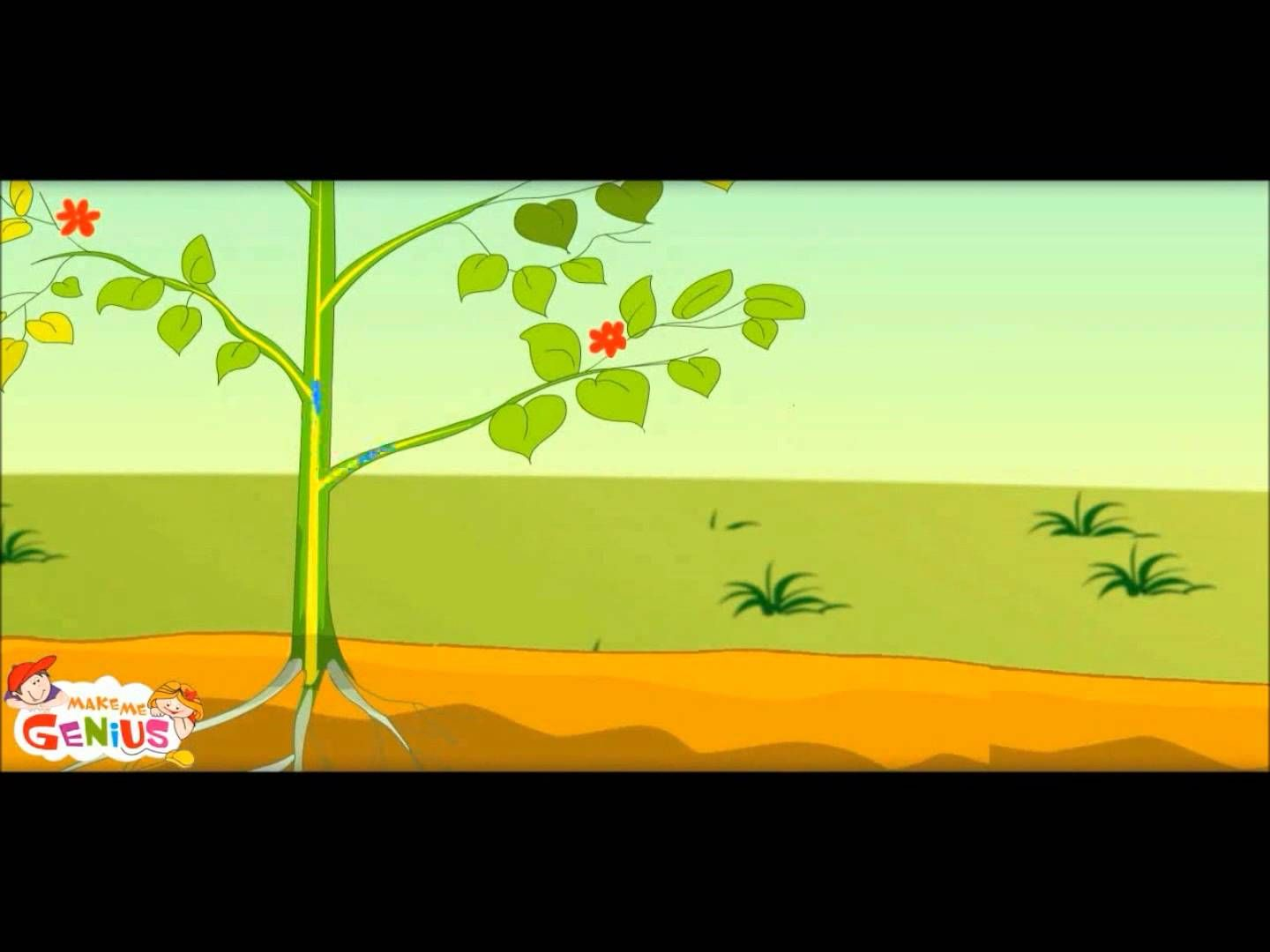 Cellular Respiration For Kids Animation