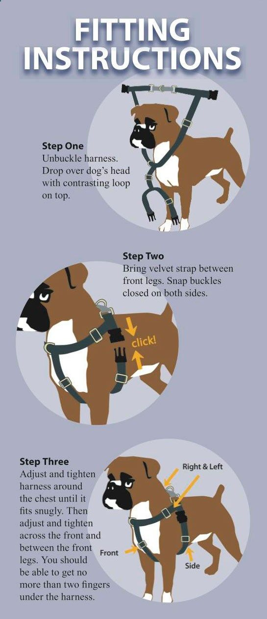 Freedom Harness Manufacturers Fit And Training Instructions Dog