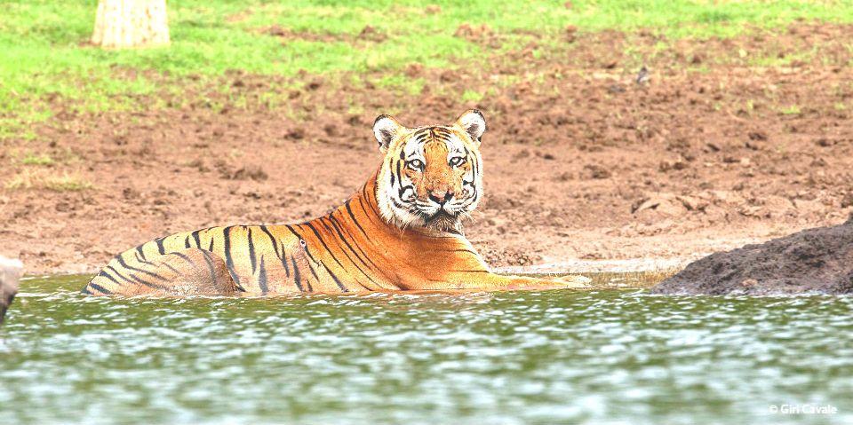 Taking a short break... Explore wildlife from resorts in