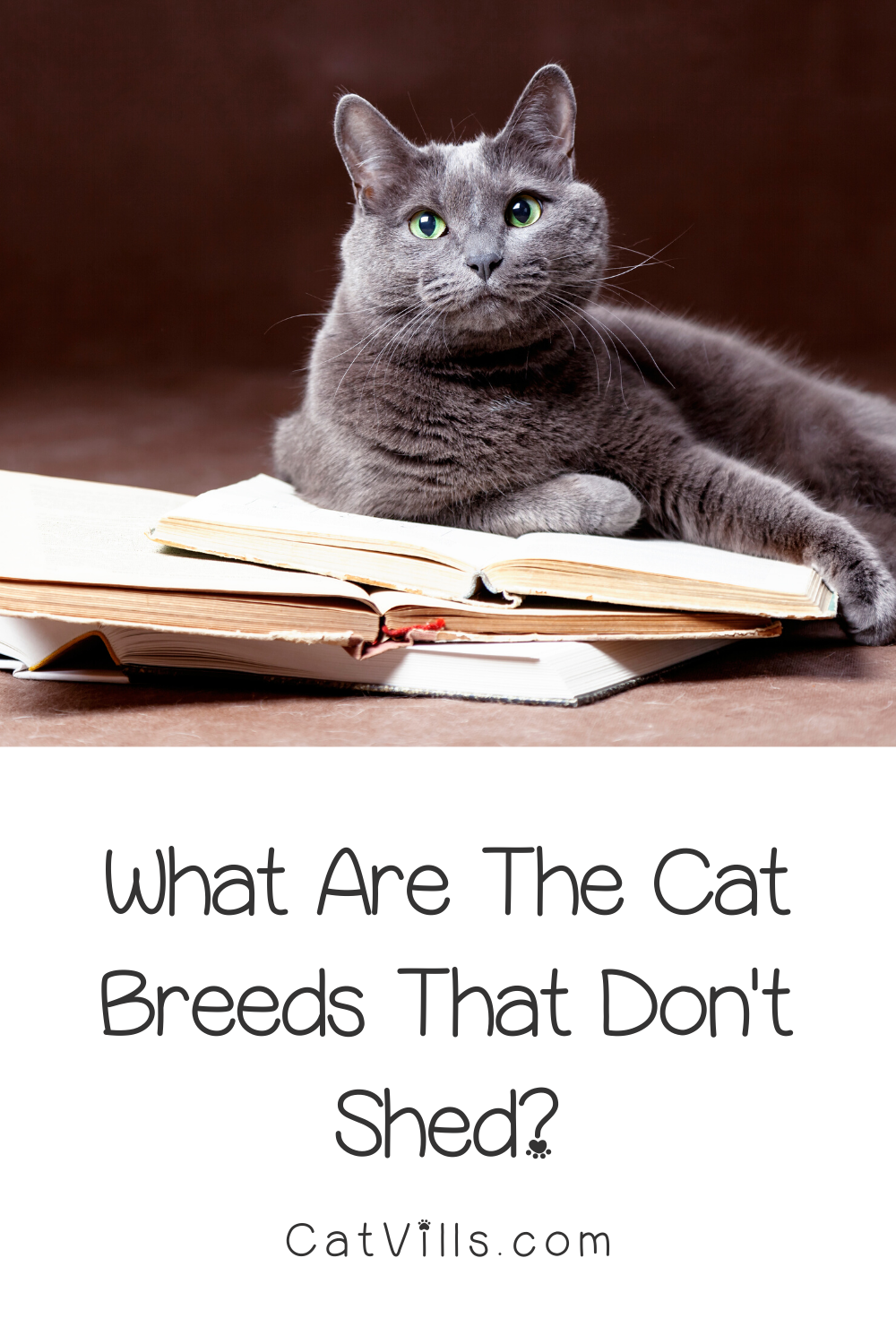 10 Cat Breeds That Don T Shed Much In 2020 Best Cat Breeds Cat Breeds Cats